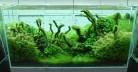 Amano-Aquascaping-665x345