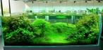 Japanese-Aquarium-665x327