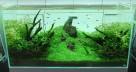 Japanese-Aquascape-665x351
