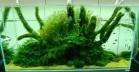 Nature-style-Aquarium-665x343