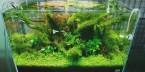 Nature-style-Aquascape-665x329