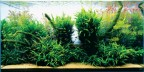 Nature-style-Aquascaping-665x331
