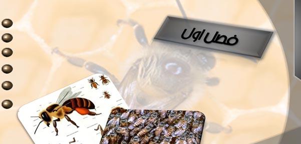 پروژه بررسی لانه سازی زنبورعسل و مرغ تاق نصرت
