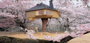 جذاب ترین ورویایی ترین خانه های درختی