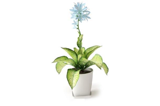 گلدان 10