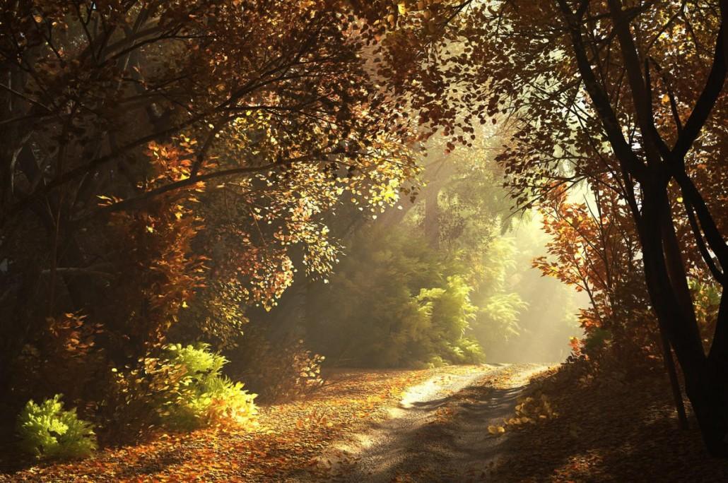 Making-of-Autumn-Scene-01
