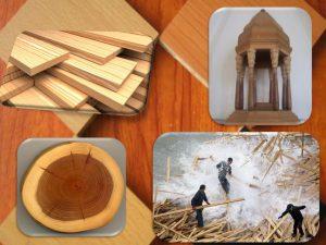 دانلود پاورپوینت معرفی چوب و کاربرد آن در ساختمان سازی