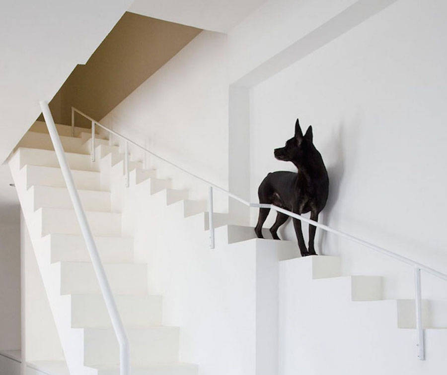 Staircase-Designed-for-Small-Pets2-900x756