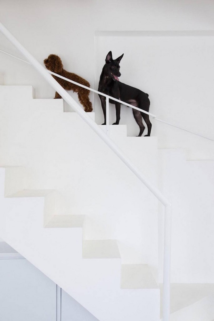 Staircase-Designed-for-Small-Pets4-900x1351
