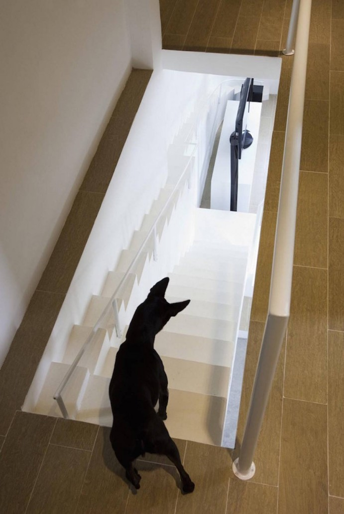 Staircase-Designed-for-Small-Pets5-900x1342