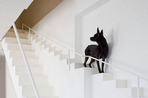 وقتی که سگ ها پله مخصوص دارند !