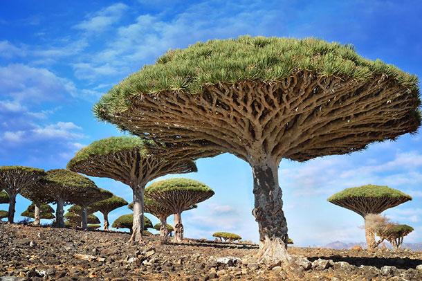 10 مورد از جذاب ترین و عجیب ترین درختان جهان