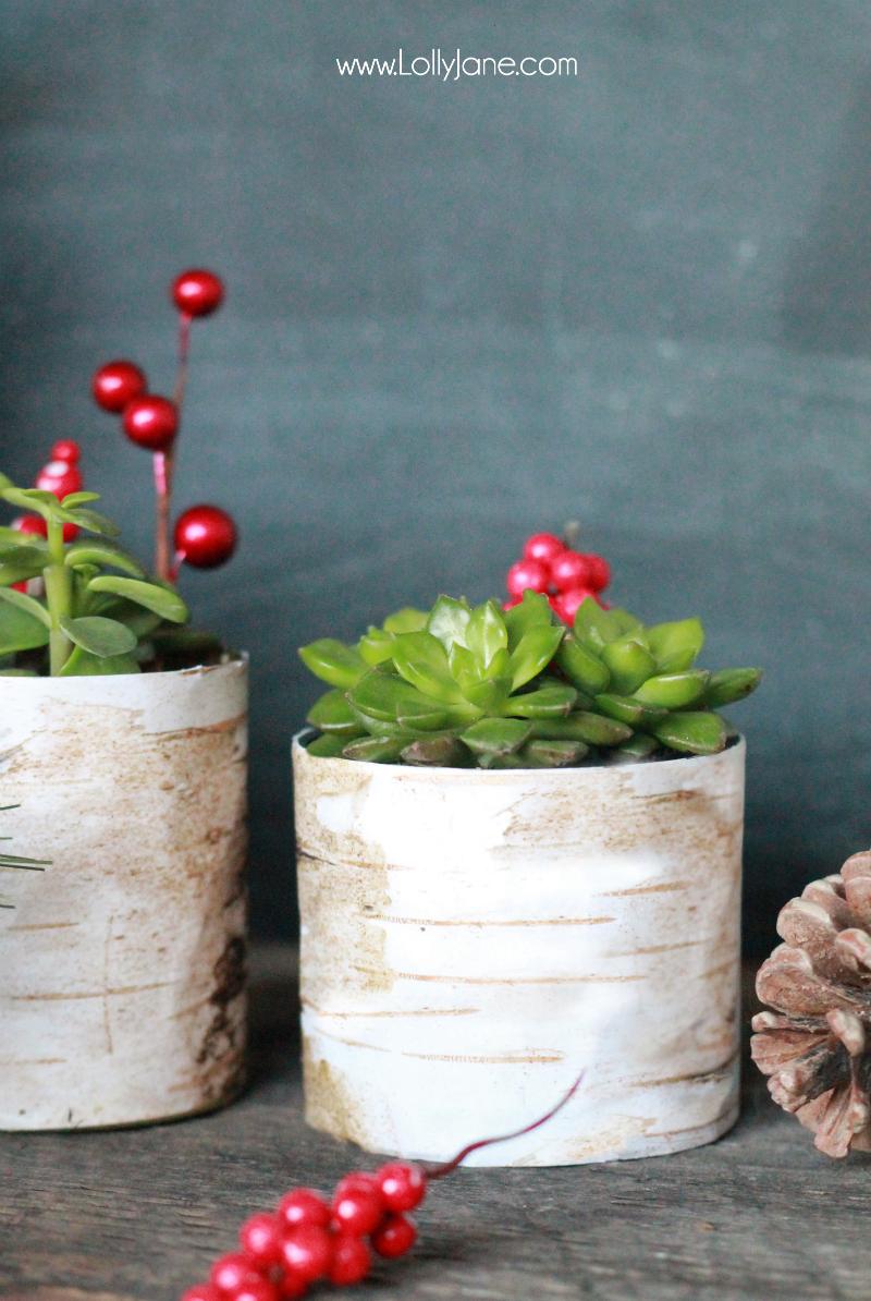 Birchwood-Succulent-Planter-Holder